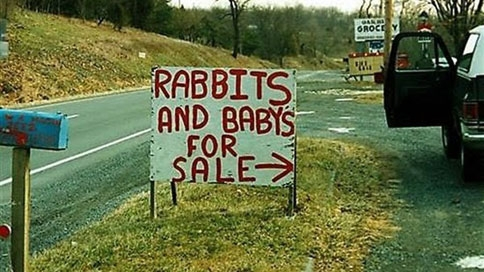 rabbit-and-baby-for-sale.jpg