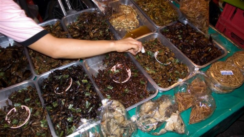 insectes,geek,manger,nourriture,appéritifs